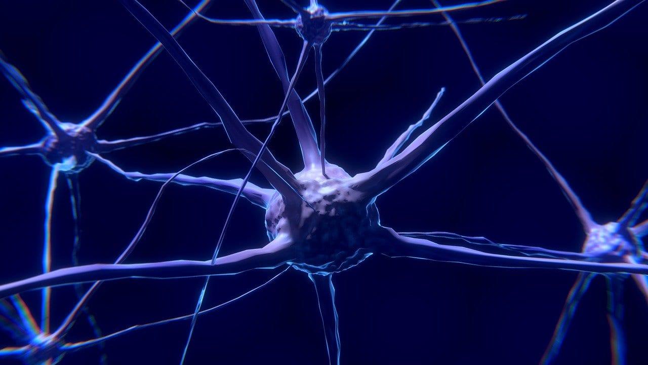 Ein Neuronennetzwerk im Gehirn